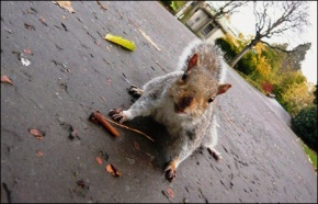 'the crazy squirrel story'…