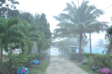 Misty Morning at the Compound