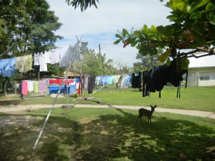 Laundry, Laundry Everywhere...